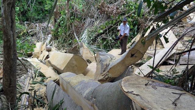 Cận cảnh rừng tự nhiên bị phá tan hoang tại Phú Yên! - 2
