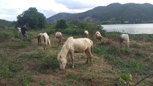"""Chàng trai 8x xây dựng trang trại ngựa bạch trên """"ốc đảo"""" Cao Nguyên - 5"""