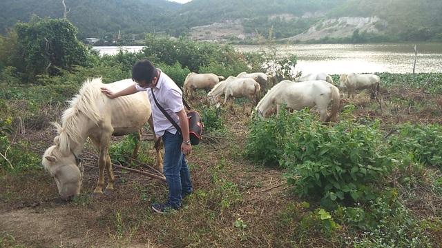 """Chàng trai 8x xây dựng trang trại ngựa bạch trên """"ốc đảo"""" Cao Nguyên - 4"""