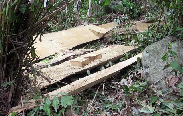 Cận cảnh rừng tự nhiên bị phá tan hoang tại Phú Yên! - 3