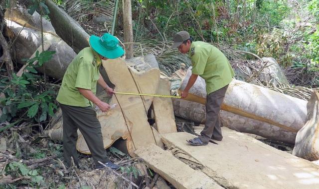 Cận cảnh rừng tự nhiên bị phá tan hoang tại Phú Yên! - 1