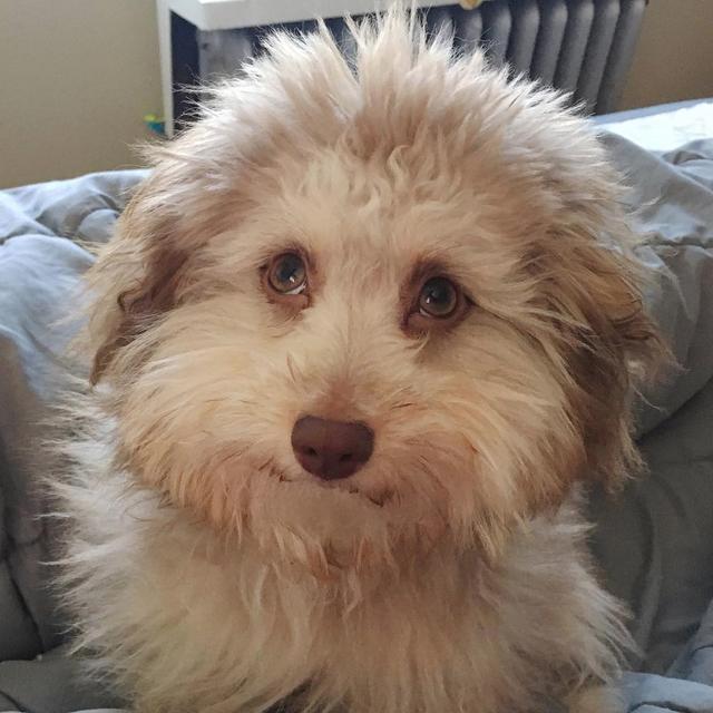Chú chó có đôi mắt và miệng cười như con người gây bão mạng - 2