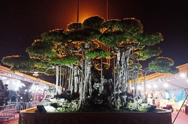 Choáng với cây sanh cổ được khách Nhật định giá hơn 20 triệu USD - 15