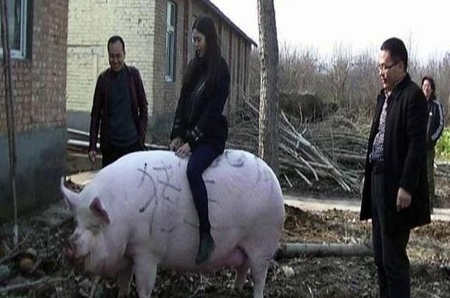 Nghỉ việc về quê nuôi 22 con lợn, nay thành đại gia khiến cả nước bất ngờ - 13