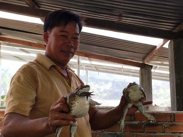 Khánh Hòa: Nuôi ếch ộp ở chuồng heo cũ kiếm gần 20 triệu đồng/tháng - 2