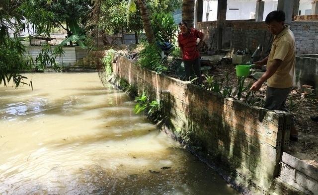 Khánh Hòa: Nuôi ếch ộp ở chuồng heo cũ kiếm gần 20 triệu đồng/tháng - 5