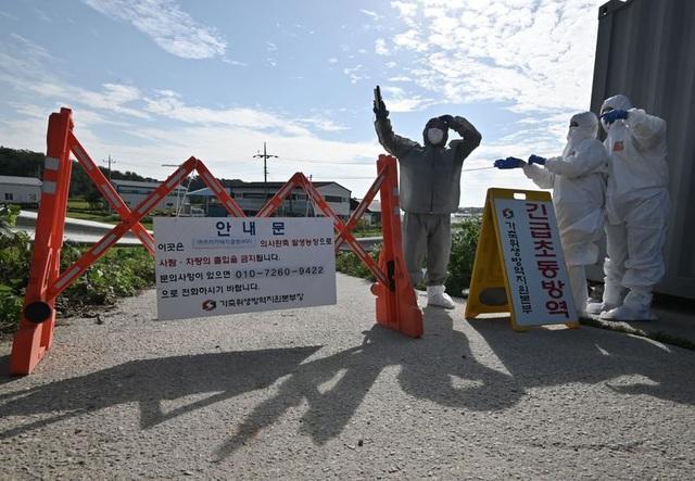 Triều Tiên đang cố tình che dấu thảm họa dịch cúm lợn? - 2