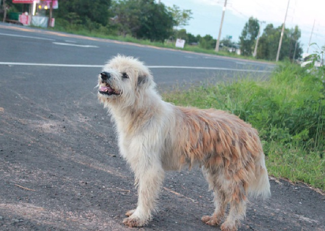 Chú chó trung thành đứng một chỗ đợi chủ suốt 4 năm khiến dân mạng cảm động - 1
