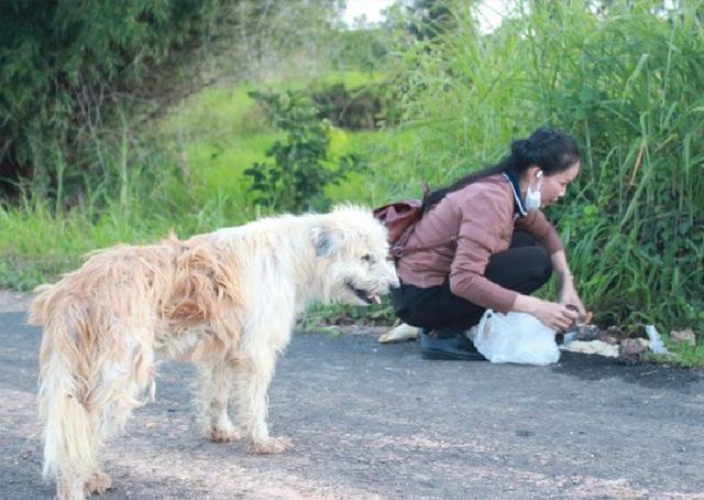 Chú chó trung thành đứng một chỗ đợi chủ suốt 4 năm khiến dân mạng cảm động - 2