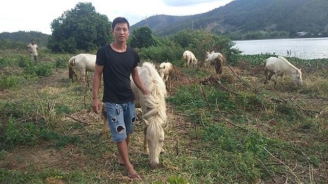 Gia Lai: Đàn ngựa mắt đỏ hàng tỷ đồng trên ốc đảo của trai 8X - 5