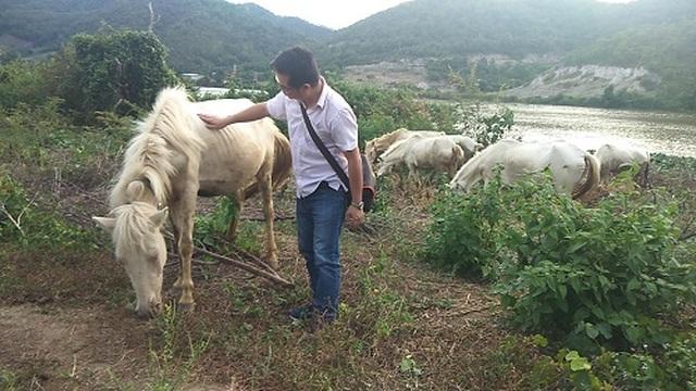 Gia Lai: Đàn ngựa mắt đỏ hàng tỷ đồng trên ốc đảo của trai 8X - 6