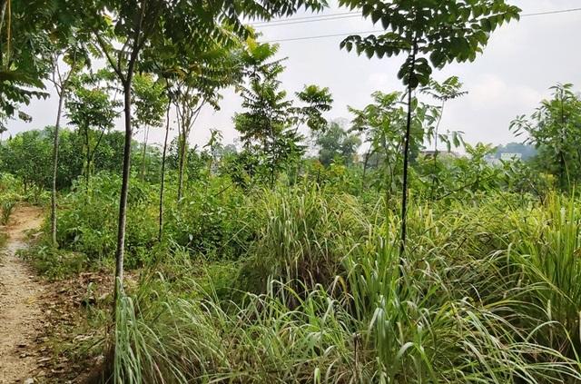 """Quy hoạch đất bị """"đổ nhầm mầu mực"""" tại Thanh Hoá: Do sai sót về nghiệp vụ! - 1"""