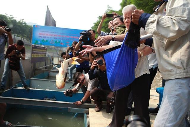 Sau 1 tháng, đàn cá Koi tại sông Tô Lịch bây giờ ra sao? - 11
