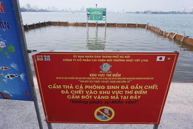Sau 1 tháng, đàn cá Koi tại sông Tô Lịch bây giờ ra sao? - 1
