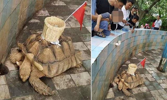 Rùa bị ép đeo sọt mây cắm cờ Trung Quốc để nhận tiền của du khách - 1