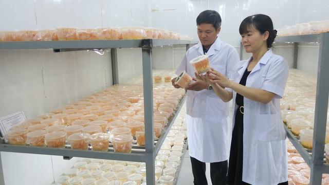 """Khám phá công nghệ nuôi trồng loài nấm """"nửa cây nửa con"""" của các nhà khoa học Việt - 1"""