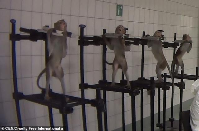 Những hình ảnh động vật gây sốc bên trong phòng thí nghiệm tại Đức - 1