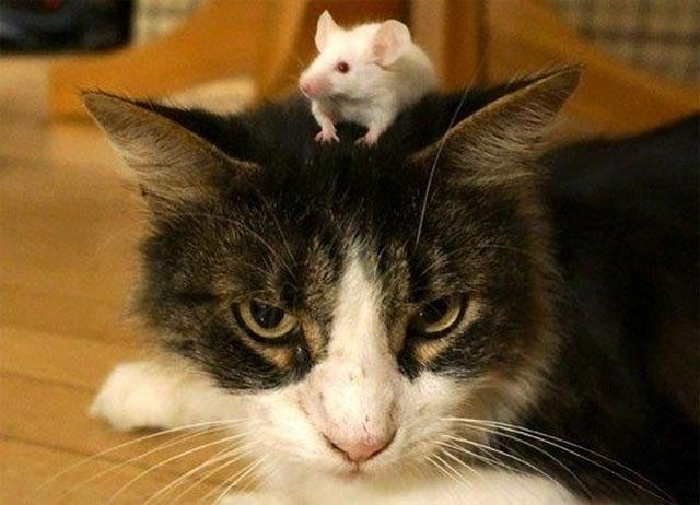 Mèo Kitys 69 của Calibra: Chú mèo công nghệ 4.0 - Giải pháp đuổi chuột hiệu quả - 1
