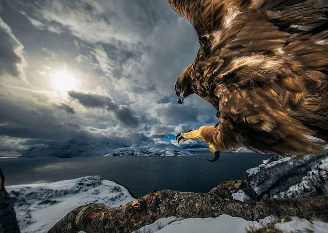 Sói và sóc đoạt giải nhất trong cuộc thi Nhiếp ảnh động vật hoang dã 2019 - 3
