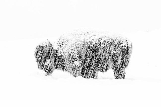 Sói và sóc đoạt giải nhất trong cuộc thi Nhiếp ảnh động vật hoang dã 2019 - 5