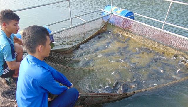 Nghệ An: Bí thư Đoàn xã nuôi cá lồng bè, thu nhập trăm triệu đồng mỗi tháng - 2