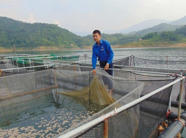 Nghệ An: Bí thư Đoàn xã nuôi cá lồng bè, thu nhập trăm triệu đồng mỗi tháng - 3