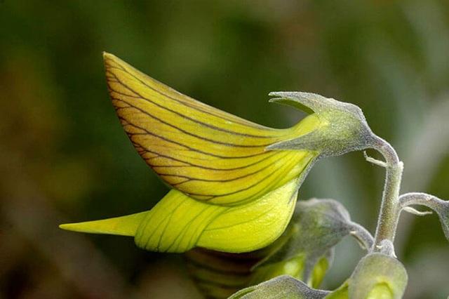 Loài hoa kỳ lạ có hình dáng y hệt chú chim thu hút hàng chục ngàn lượt tương tác - 10