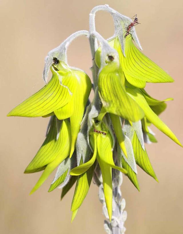Loài hoa kỳ lạ có hình dáng y hệt chú chim thu hút hàng chục ngàn lượt tương tác - 7