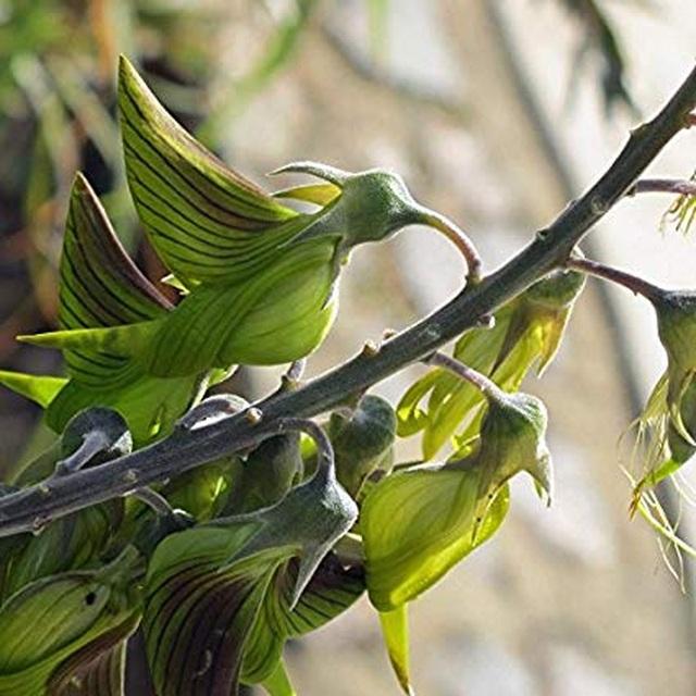 Loài hoa kỳ lạ có hình dáng y hệt chú chim thu hút hàng chục ngàn lượt tương tác - 11