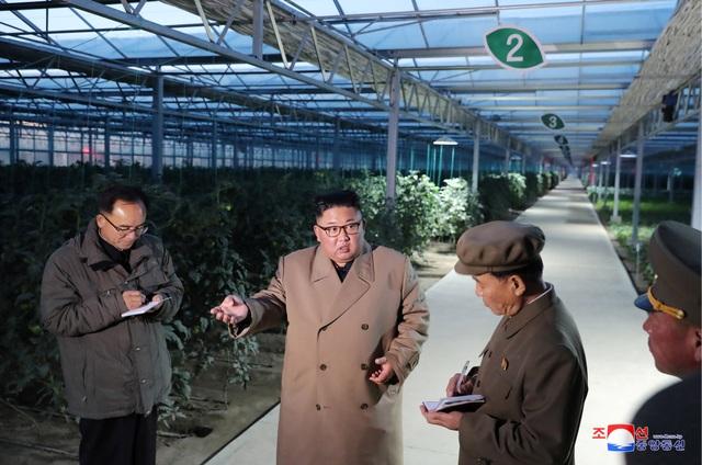 Ông Kim Jong-un thăm trang trại trồng rau trước nguy cơ thiếu lương thực - 4
