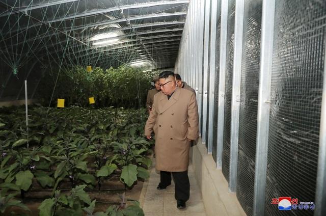 Ông Kim Jong-un thăm trang trại trồng rau trước nguy cơ thiếu lương thực - 5