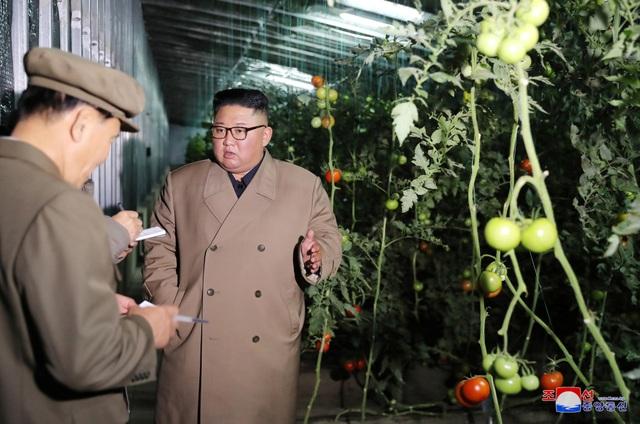 Ông Kim Jong-un thăm trang trại trồng rau trước nguy cơ thiếu lương thực - 3