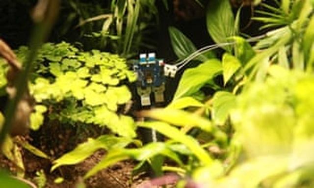 Dạy cho thực vật... chụp ảnh tự sướng - 1