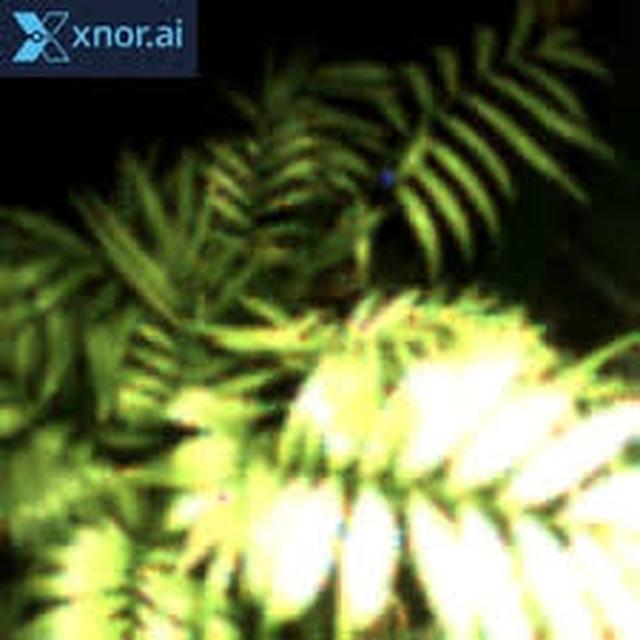 Dạy cho thực vật... chụp ảnh tự sướng - 2