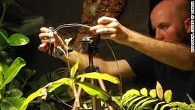 Dạy cho thực vật... chụp ảnh tự sướng - 3