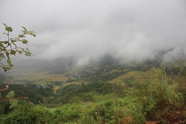 Những loại lá rừng đặc sản trên vùng núi Tây Nguyên - 1