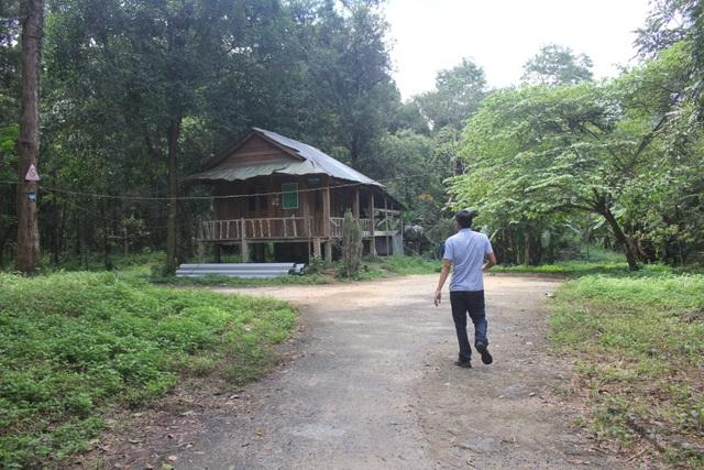 Thắp đèn canh rừng trắc trăm tuổi quý hiếm - 6