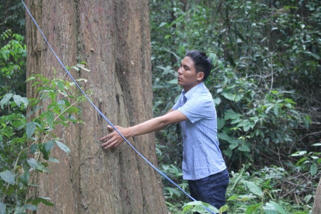 Thắp đèn canh rừng trắc trăm tuổi quý hiếm - 1