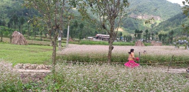 Hà Giang mùa đá ra hoa - 6