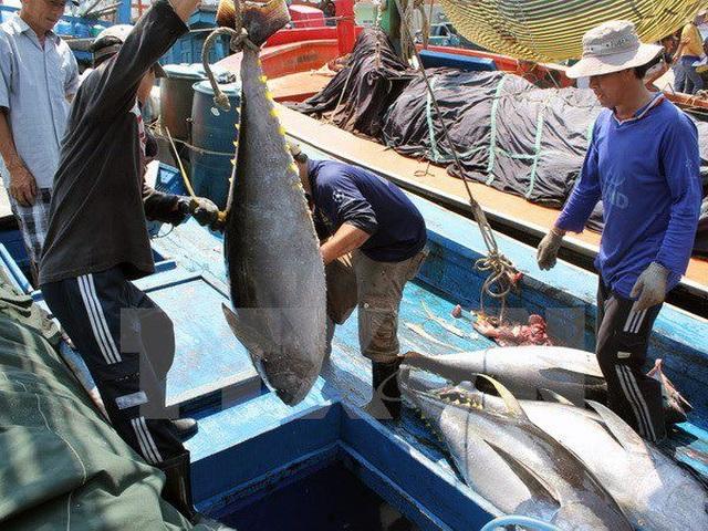 Doanh nghiệp XKLĐ phái cử gần 12.000 thuyền viên làm việc ở tàu cá nước ngoài - 1