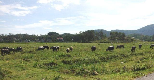 Dự án trồng chuối 4 triệu USD:Doanh nghiệp tháo chạy, xin không trả tiền dân - 1