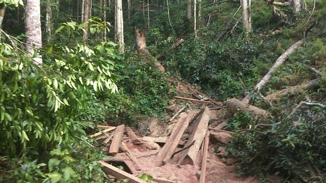 Tan hoang cánh rừng cổ thụ Mang Yang giữa đại ngàn Tây Nguyên! - 1