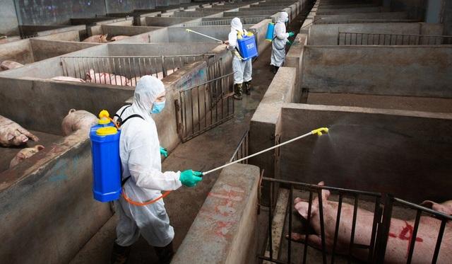 Trung Quốc khủng hoảng thịt lợn nghiêm trọng, người dân chuyển sang ăn thịt chó - 2