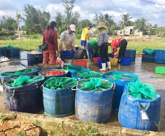 Quảng Bình: Dân bãi ngang thoát nghèo nhờ ...nuôi cá lóc trên vùng cát trắng - 6