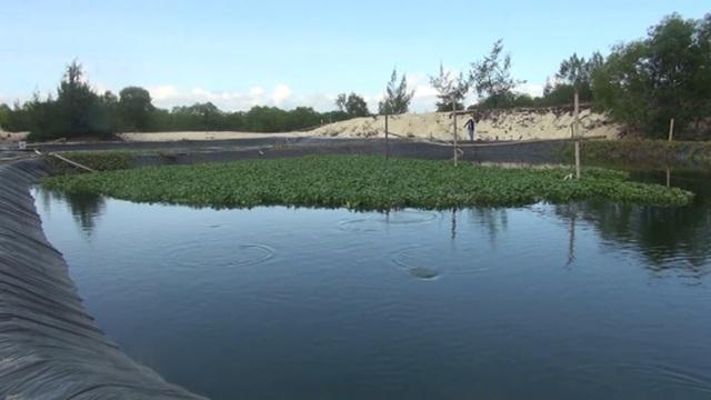 Quảng Bình: Dân bãi ngang thoát nghèo nhờ ...nuôi cá lóc trên vùng cát trắng - 1