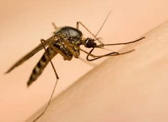 Sốt cao liên tục, bé gái 7 tuổi tử vong do sốt xuất huyết - 1