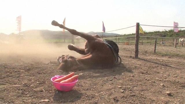 Chết cười với chú ngựa giả chết mỗi khi bị người cưỡi - 10
