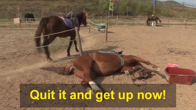 Chết cười với chú ngựa giả chết mỗi khi bị người cưỡi - 12