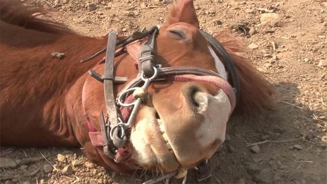 Chết cười với chú ngựa giả chết mỗi khi bị người cưỡi - 14