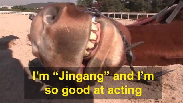 Chết cười với chú ngựa giả chết mỗi khi bị người cưỡi - 2